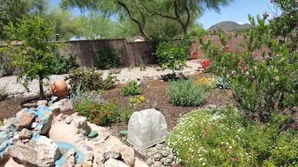 My backyard garden.